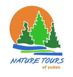 Nature Tours of Yukon Aurora Borealis and summer adventures
